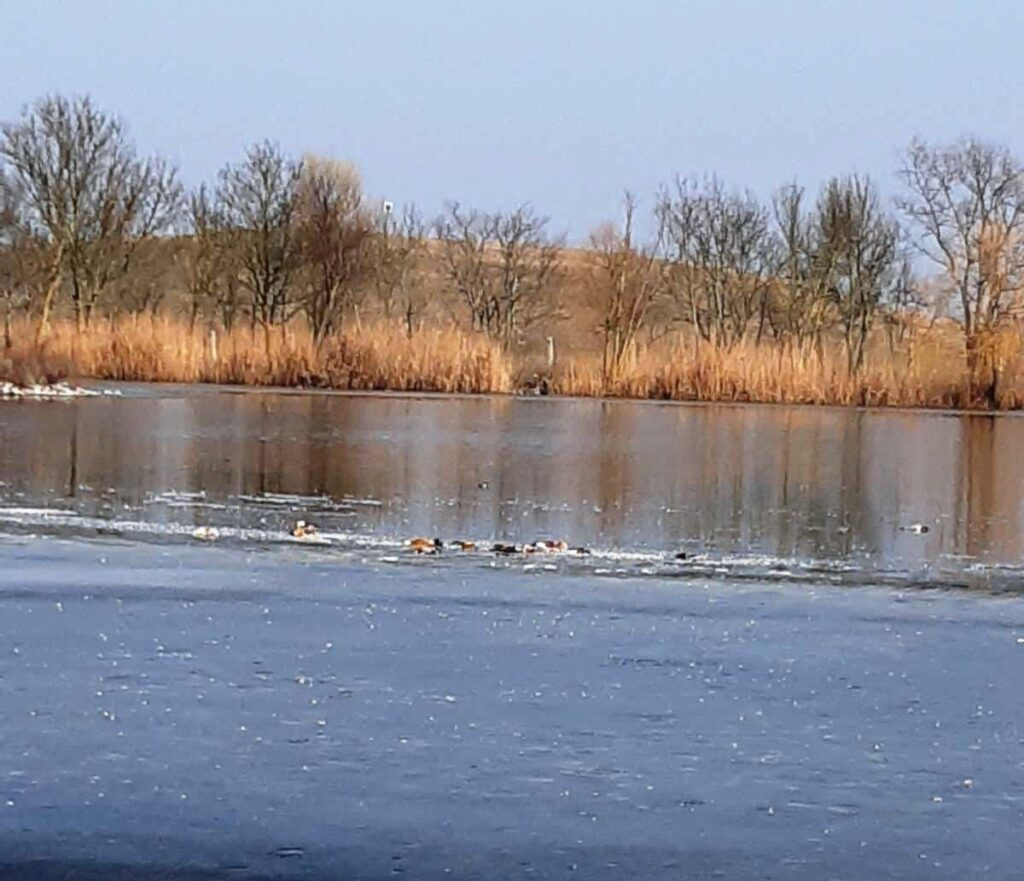 Херсонська область, Асканія-Нова, загибель птахів