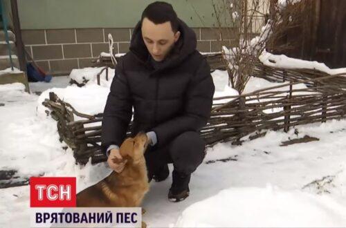 Почув скавуління з річки: на Львівщині хлопець врятував собаку, якого зв'язали і викинули помирати (відео)